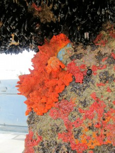 ...including this fire coral!
